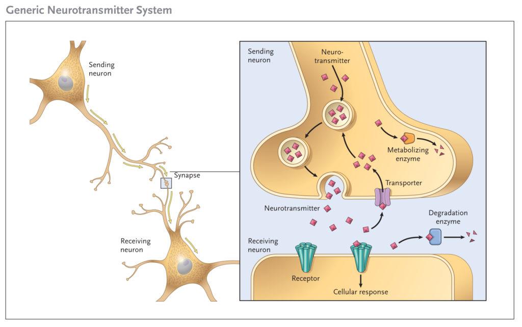 מערכת החיסון - איזון מערכת החיסון - ראינו את המורכבות בה עובדת מערכת החיסון