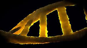 הגנטיקה של קנאביס - המידע התורשתי של צמח הקנאביס גנטיקה של קנאביס